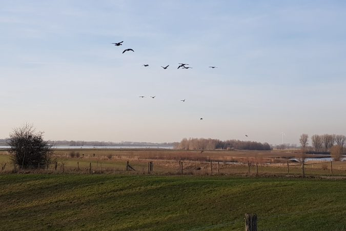 Grüne Landschaft in Wesel